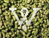 Wobbly Brewery Hereford Beer Hops