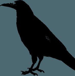 wobbly_crow